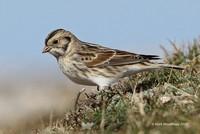 Mark Woodhead's gallery at Rare Bird Alert