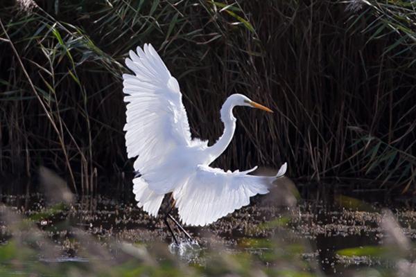 Rare Bird Alert's weekly birding round-up 23 - 29 October 2013