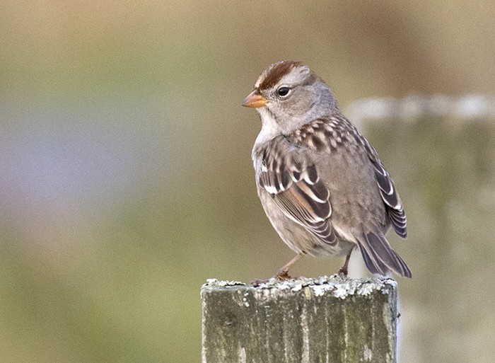 Controversial insecticides shown to threaten survival of wild birds