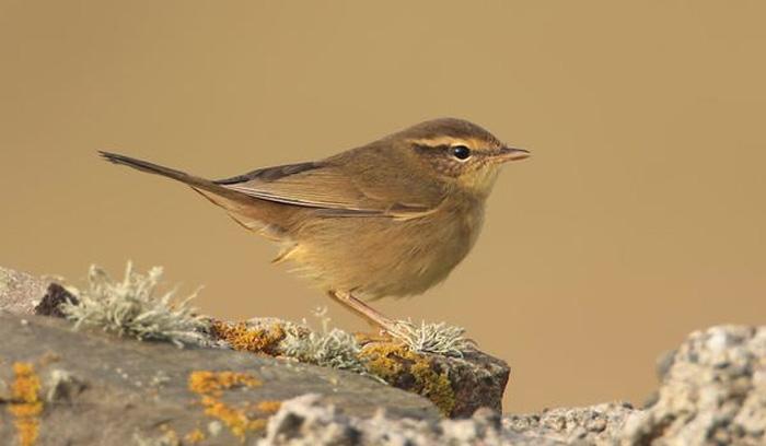 Mark Golley's weekly birding round-up 14-20 Oct