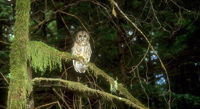 Continued Decline of the Northern Spotted Owl Associated