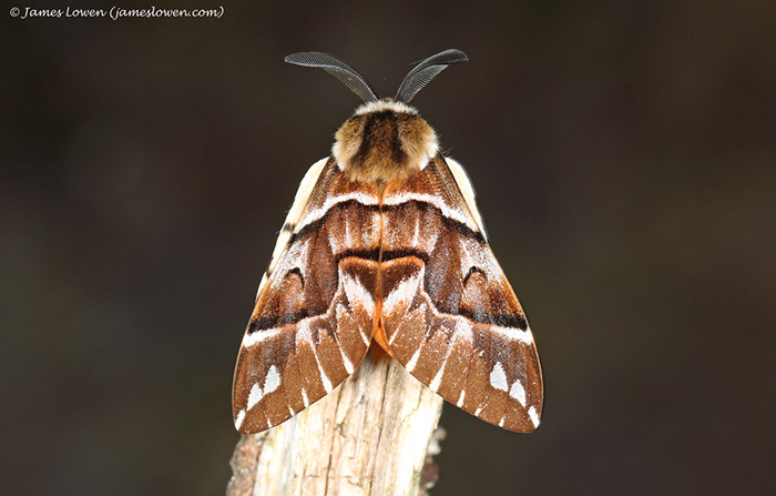 Major study reveals huge decline in moth abundance