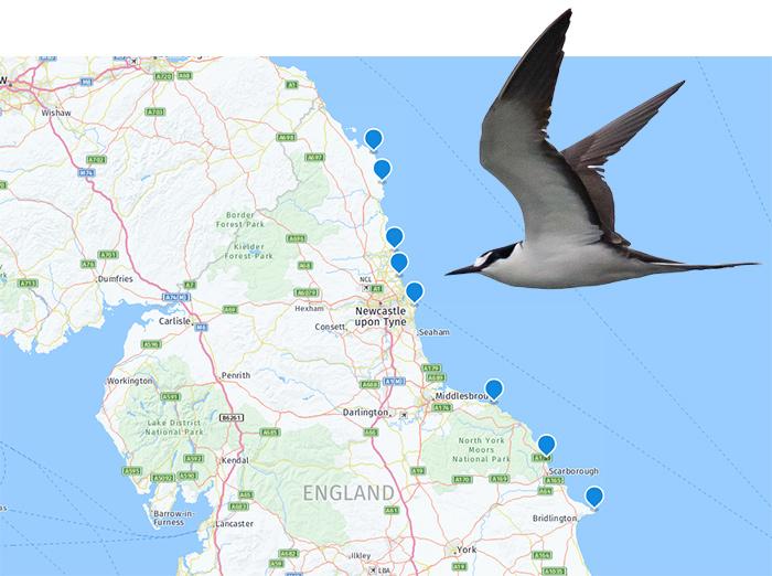 The @RareBirdAlertUK birding round-up 3 - 9 Jul