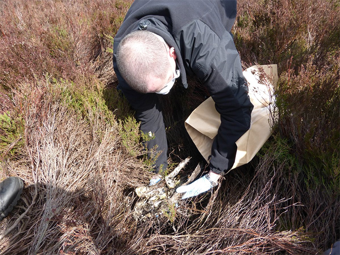 Another dead Hen Harrier found on North Yorkshire grouse moor
