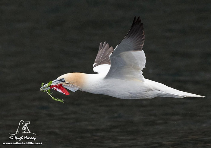 Birds and Debris: new citizen science project launched