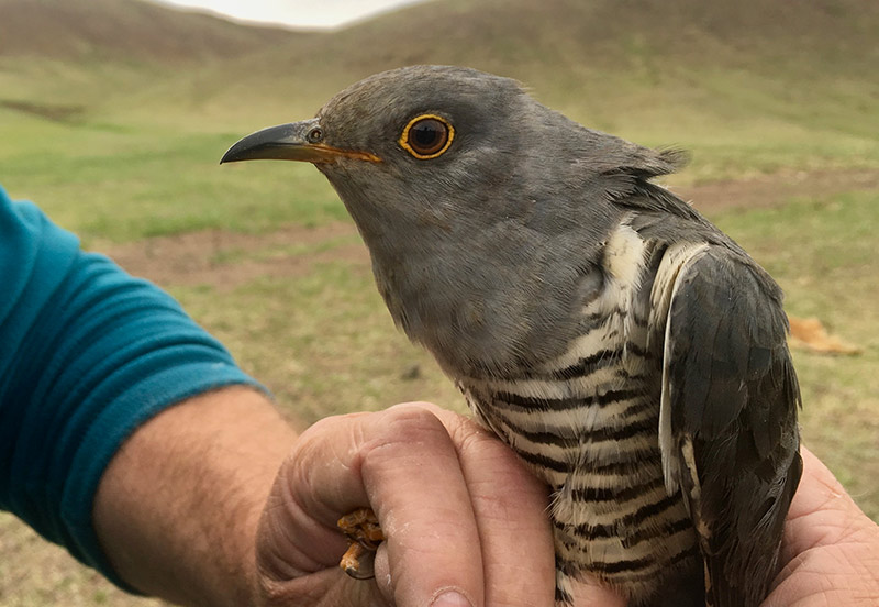 Oriental Bird Club, Autumn Meeting