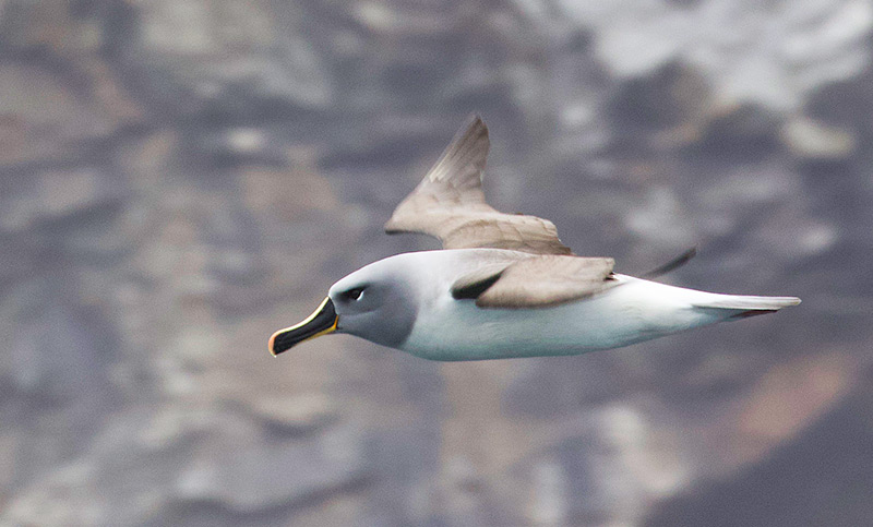 Chile introduces new fishing regulations to save seabirds