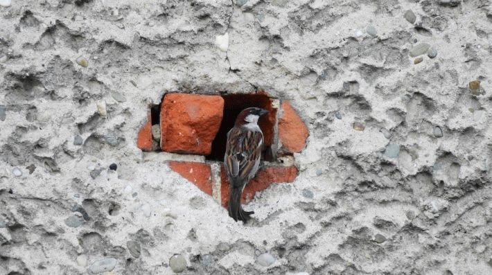 Energy-saving modernisation of villages may reduce farmland bird numbers