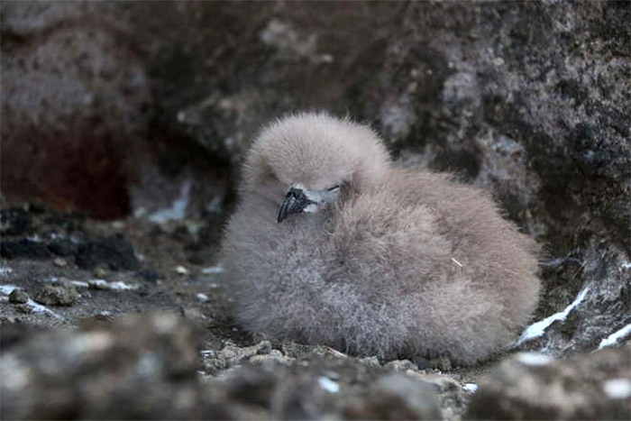 Become a Seabird Scientist from your sofa!